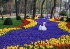 Festival Tulip di Istanbul turki