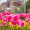 Bunga Tulip di Turki