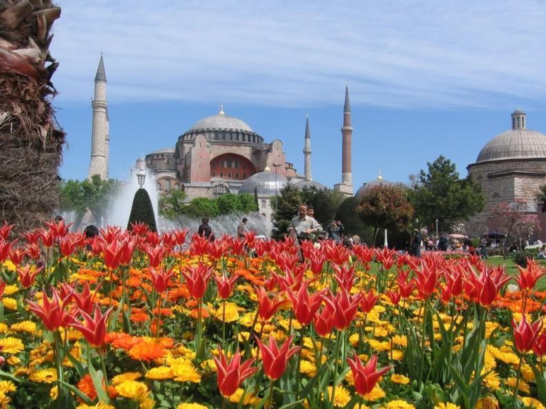 tulips istanbul