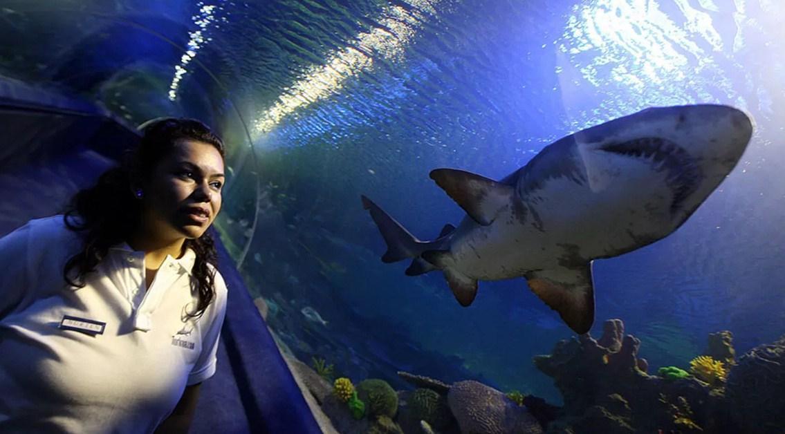 Sea Life Aquarium, Bayrampasa, Istanbul
