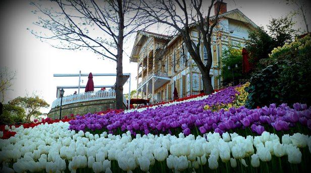 Emirgan Park Tulip Festival