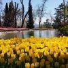 Taman Emirgan Turki, Tempat Menikmati Keindahan Permadani Tulip di Istanbul