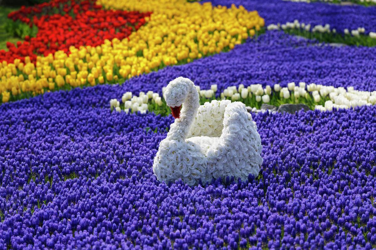 Festival Tulip di Turki